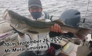 20-09-26-19-19-02-252_deco_copy_800x489