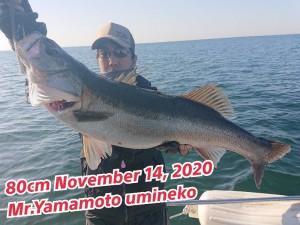 20-11-17-17-02-14-153_deco_copy_800x600